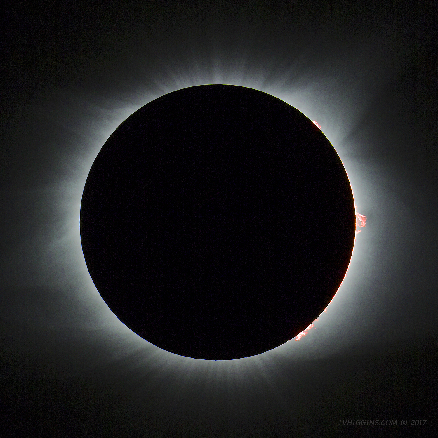 2017 Solar Eclipse: Prominences II